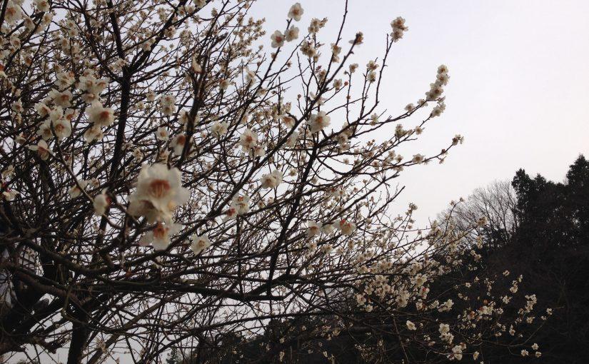 春のギャラリー巡り